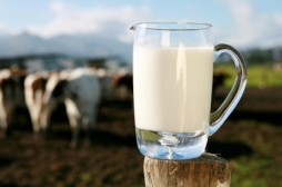 Aavana A2 Cow Milk